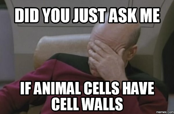 animal cells and plant cells    correct one